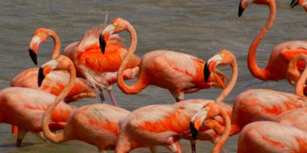 Depredación Animal Por Hambre En Venezuela: Flamingos, Caballos, Palomas Y Osos Hormigueros A La Olla.