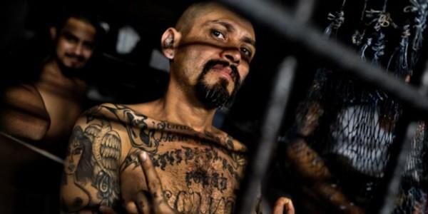 Administración Trump Arremete Contra Los Pandilleros De MS13: Decenas Capturados En LA.